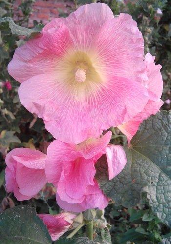 flowers - ~ Backstage ~ N.
