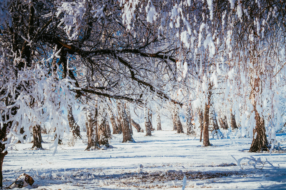 Белая перспектива - Дмитрий Тарарин