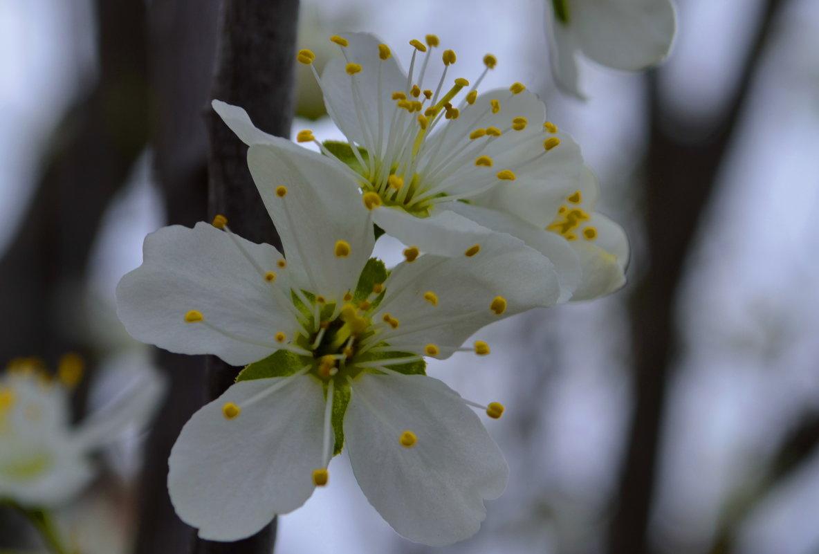 Весна... - Наталья Петракова