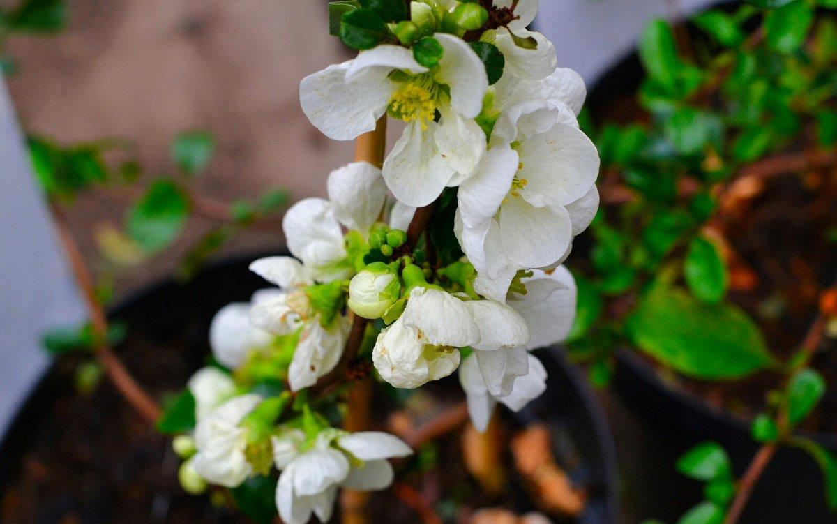 Весна и цветы - Милешкин Владимир Алексеевич