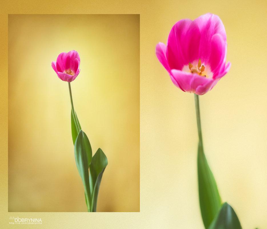 Тюльпан - Юка Добрынина