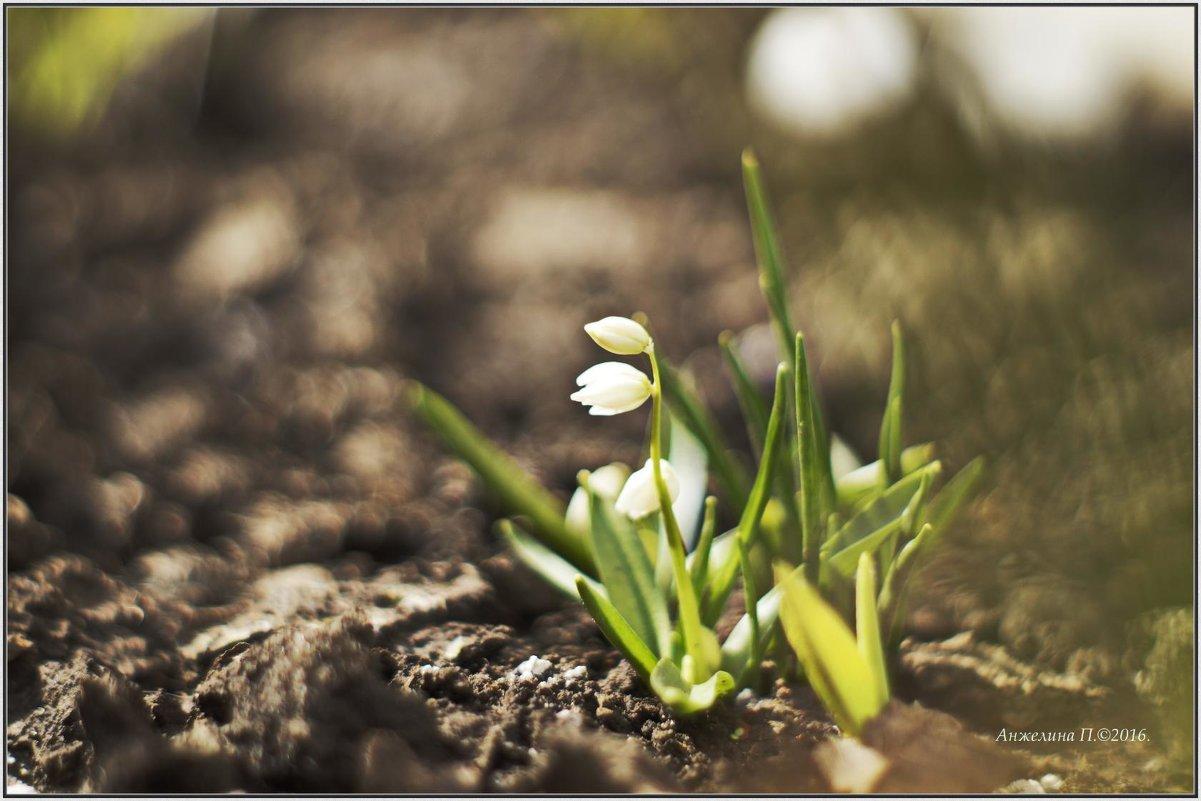Весна. - Анжелина Пилихосова