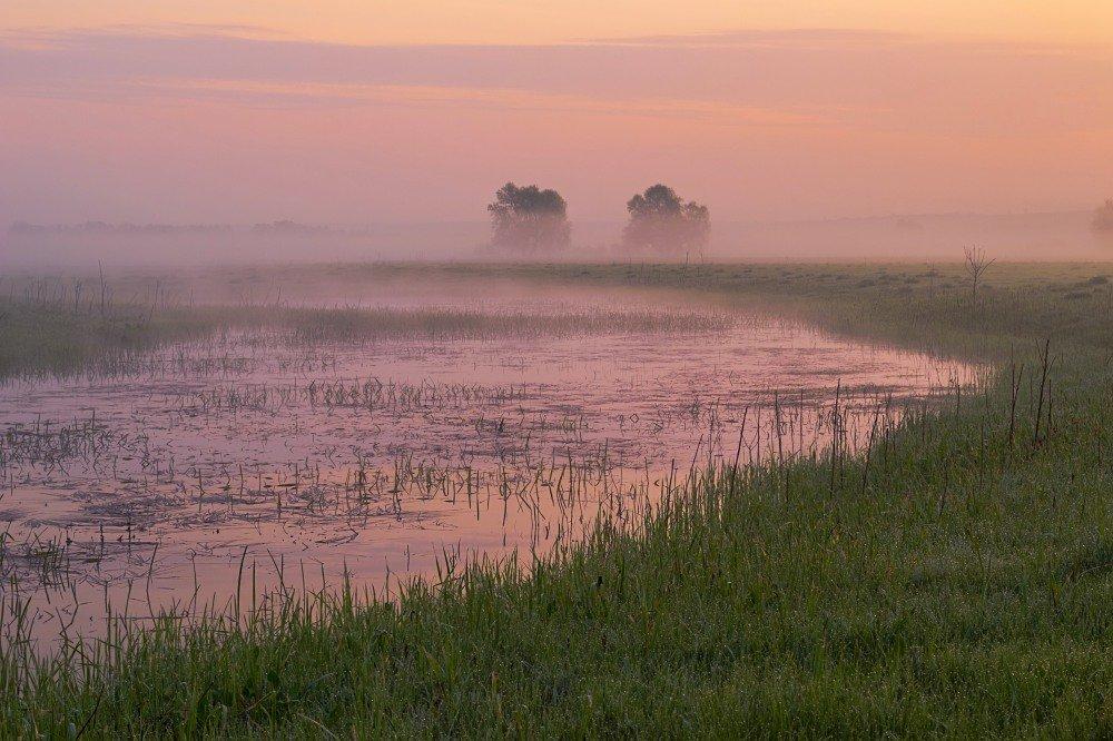 В туманном поле - Сергей Корнев