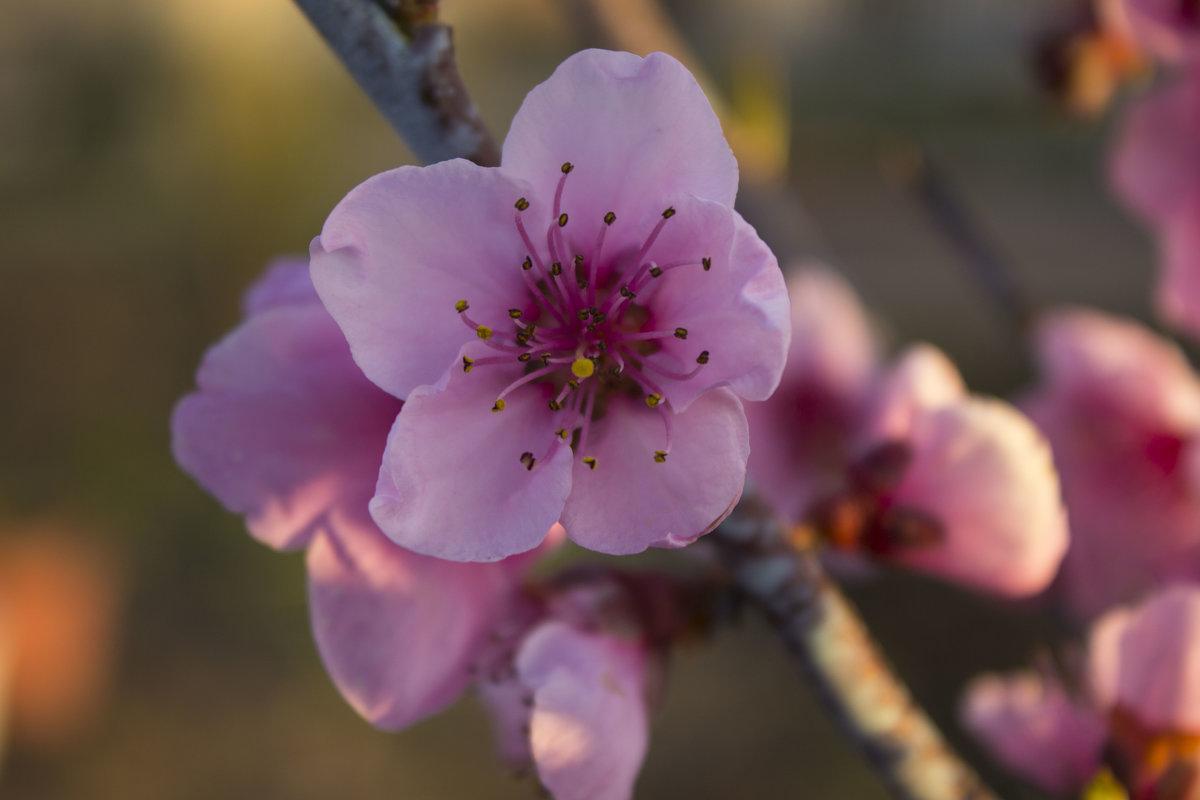 цветок - олег мысак