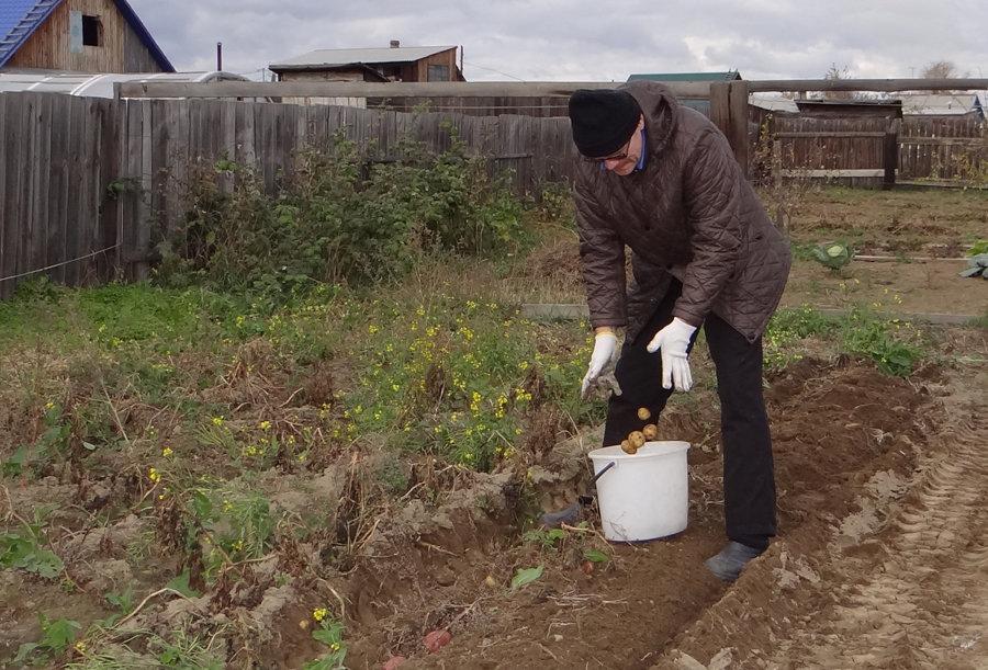 Картошечка - Елена Тренкеншу