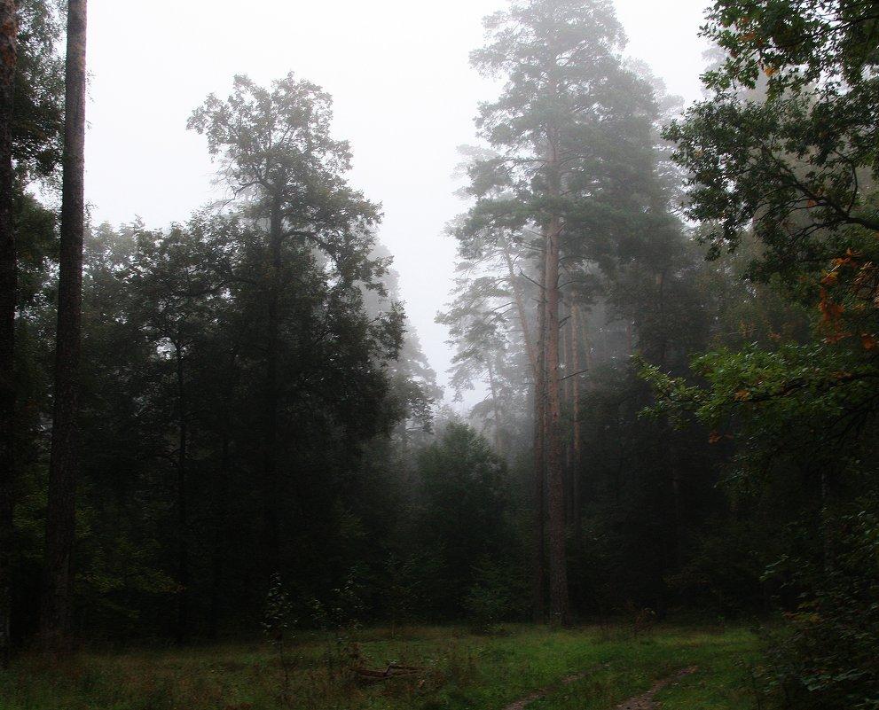 Туман. - Валерия  Полещикова