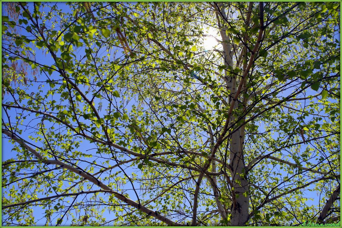 Весенний свет - Андрей Заломленков