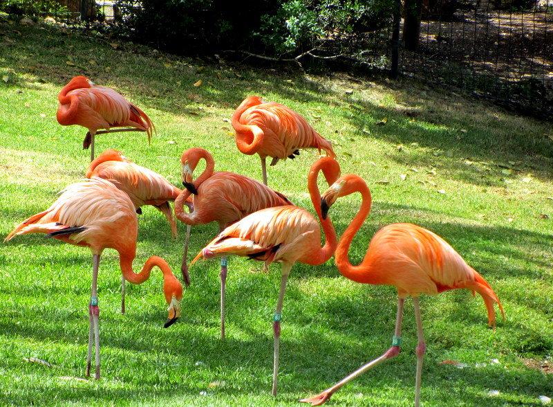 Розовые фламинго - Герович Лилия