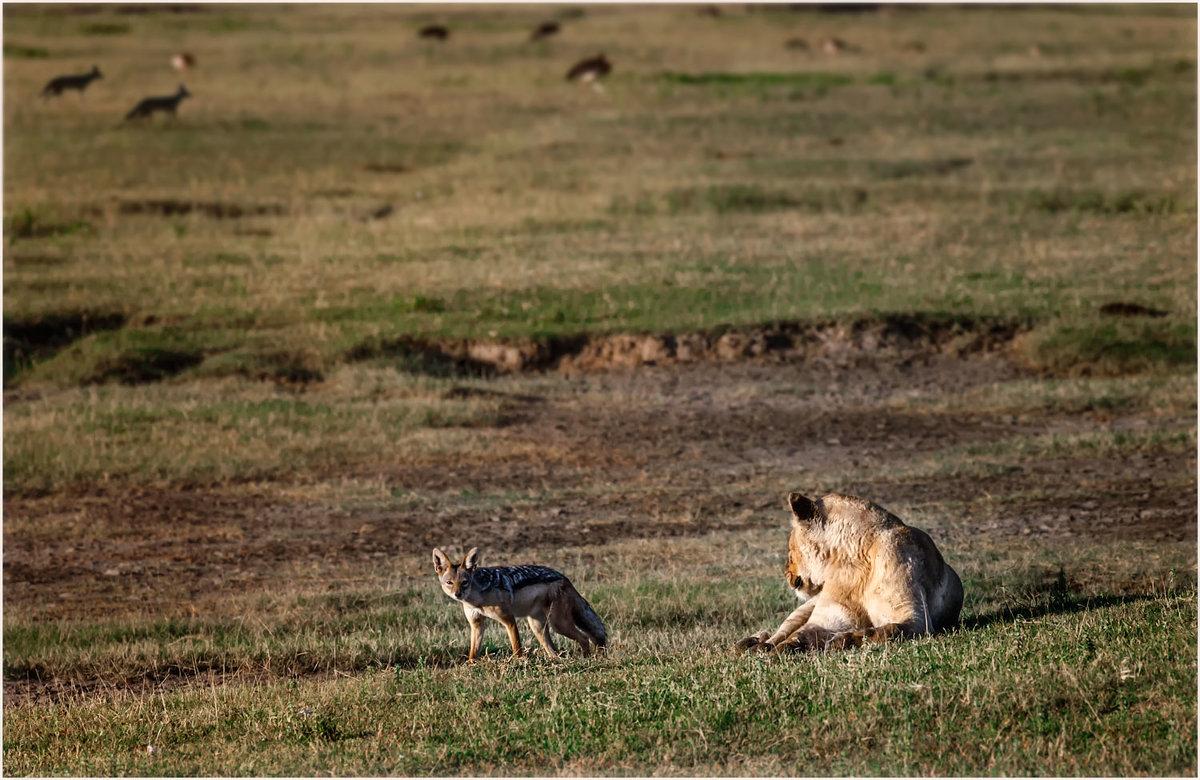 Утро в саванне...Танзания! - Александр Вивчарик