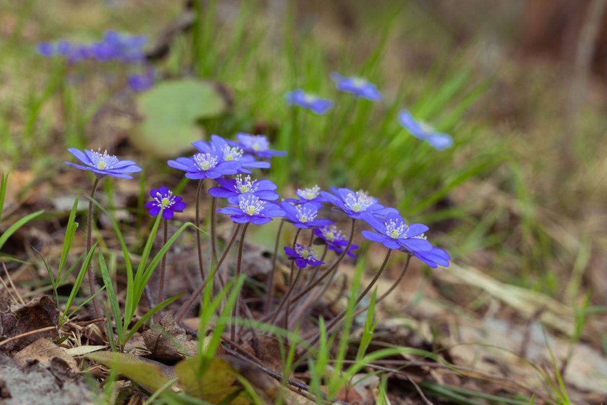 На лесной поляне - Светлана