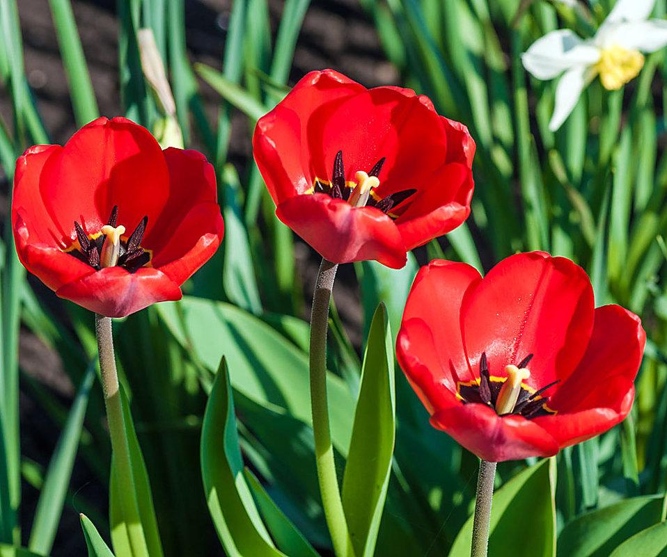 Весенние цветы - Любовь Потеряхина