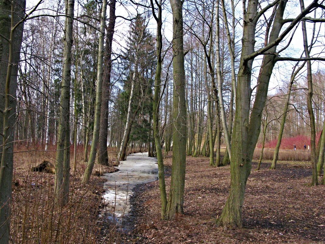 Как весны меж собою схожи: и звон ручьев и тишина... - ТАТЬЯНА (tatik)