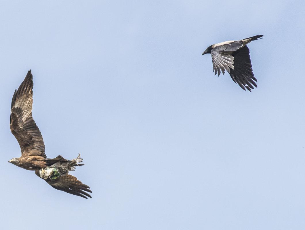 Птицы вывозят мусор из города) - Валерий Синегуб