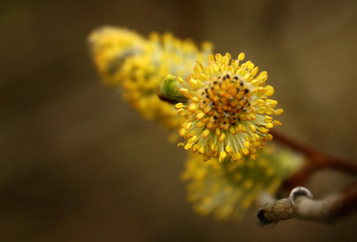 весна - раф