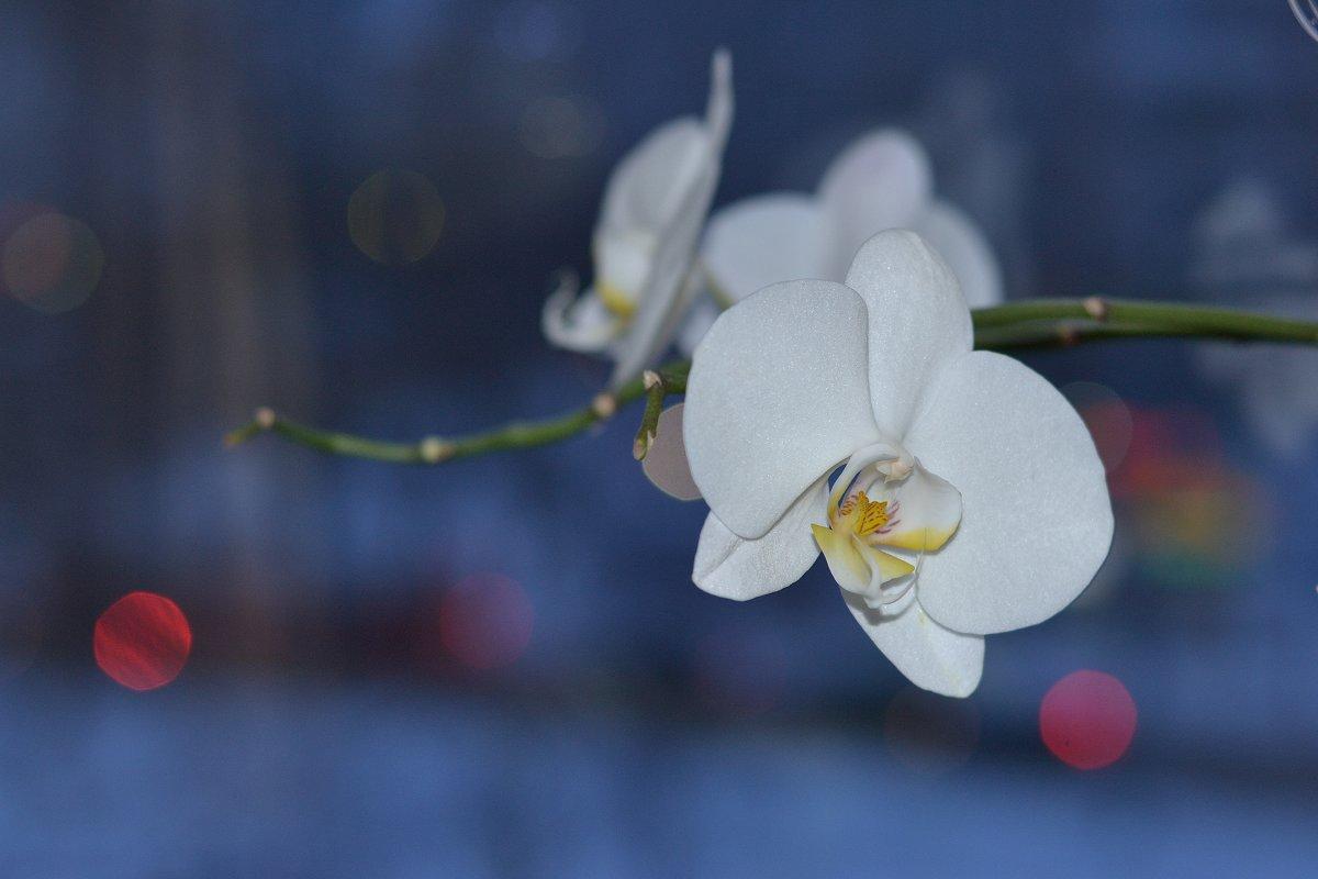 Орхидея - Алексей Могилёв