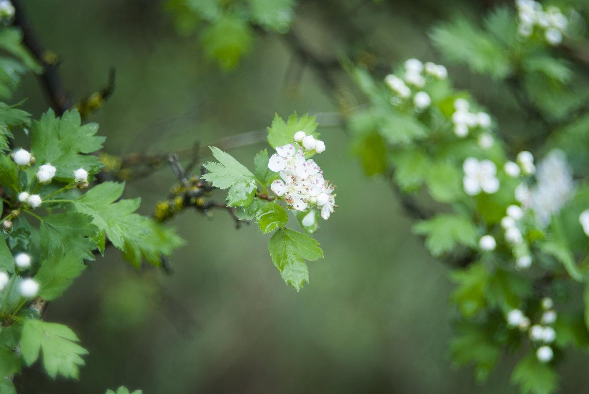 В лесу после дождя - Полина Дюкарева
