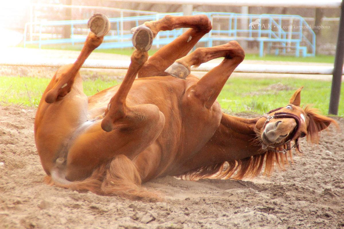 лошадки как кошечки - Александра Карпушкина