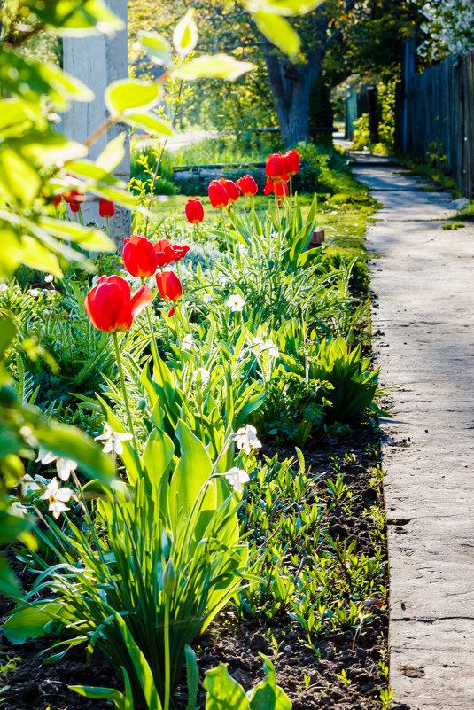 Тюльпаны в апреле - Сергей Малый