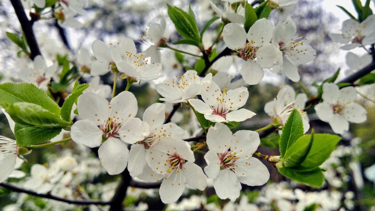 гомельская весна - yuri Zaitsev
