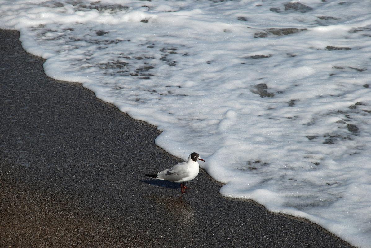 А я стою одна на берегу. - Lara