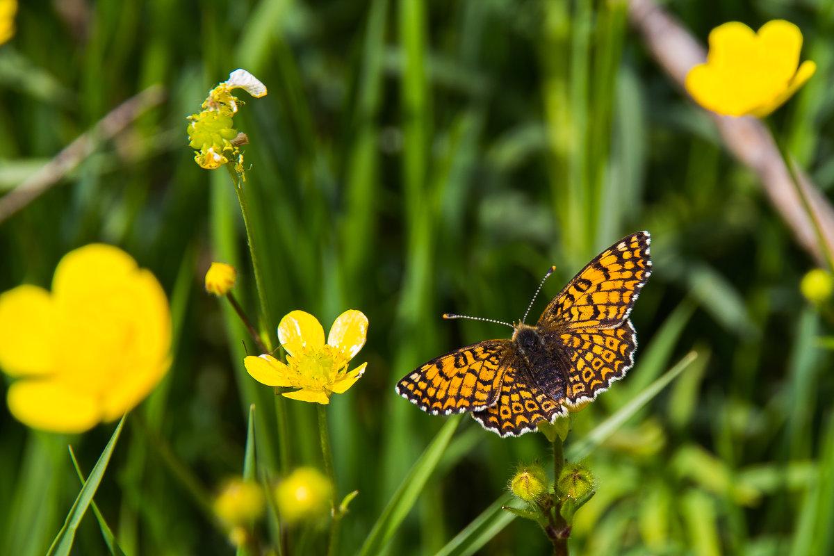 Бабочка - Алексей