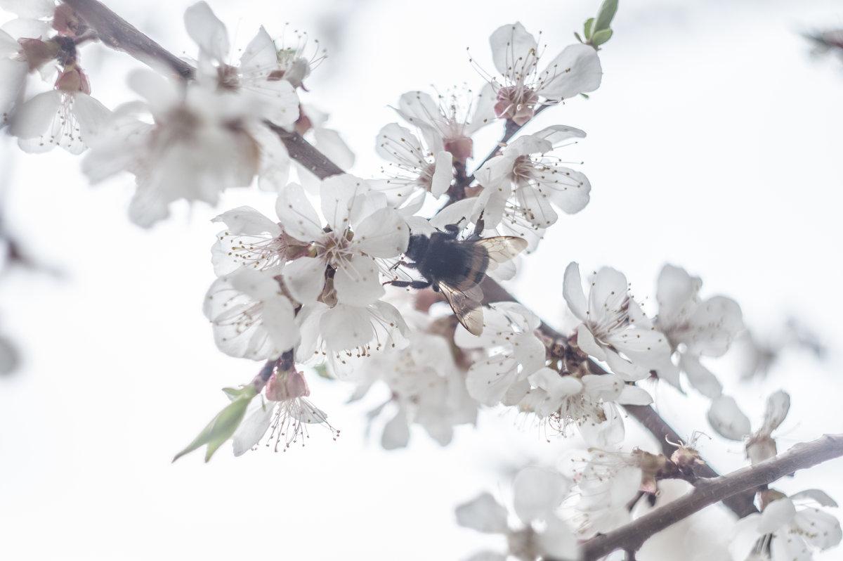 Flower_85 - Trage
