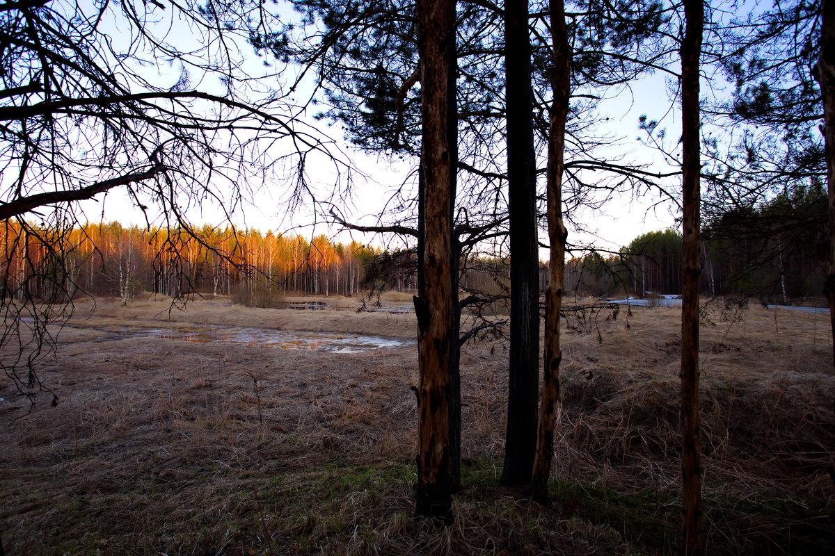 лесной закат - Виталий Житков