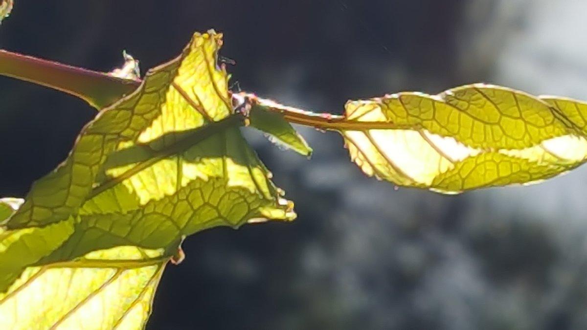 В весенних лучах солнца - Ирина