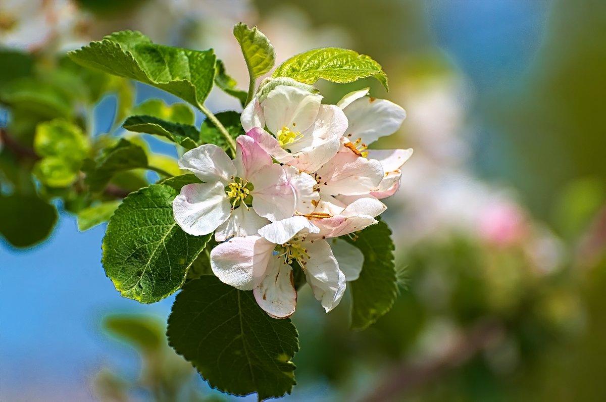Весна пришла! - Владимир Богославцев(ua6hvk)
