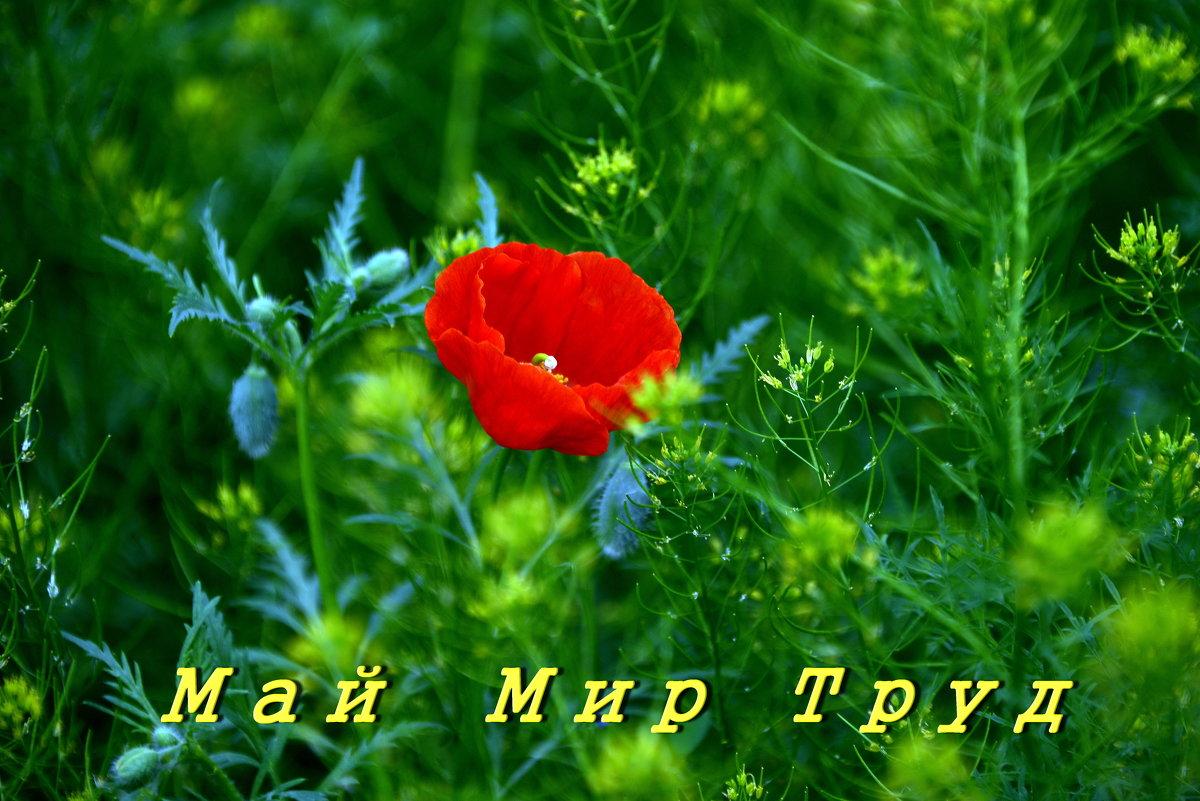 Для тех, кто помнит - Анатолий Чикчирный