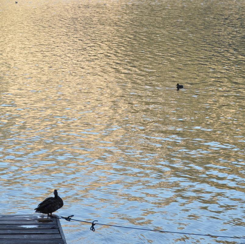 Утки на озере в Гальштаде, Австрия - Ирина
