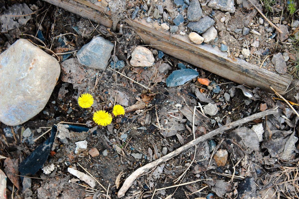 Весна - Andrew B.