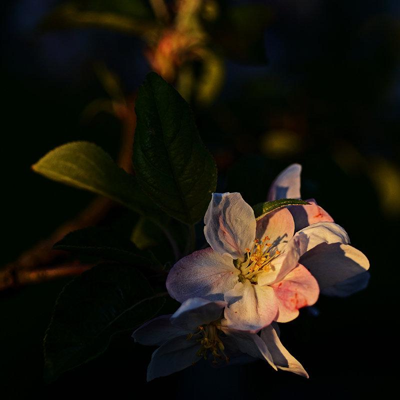 Когда яблони цветут... - Александр Бойко