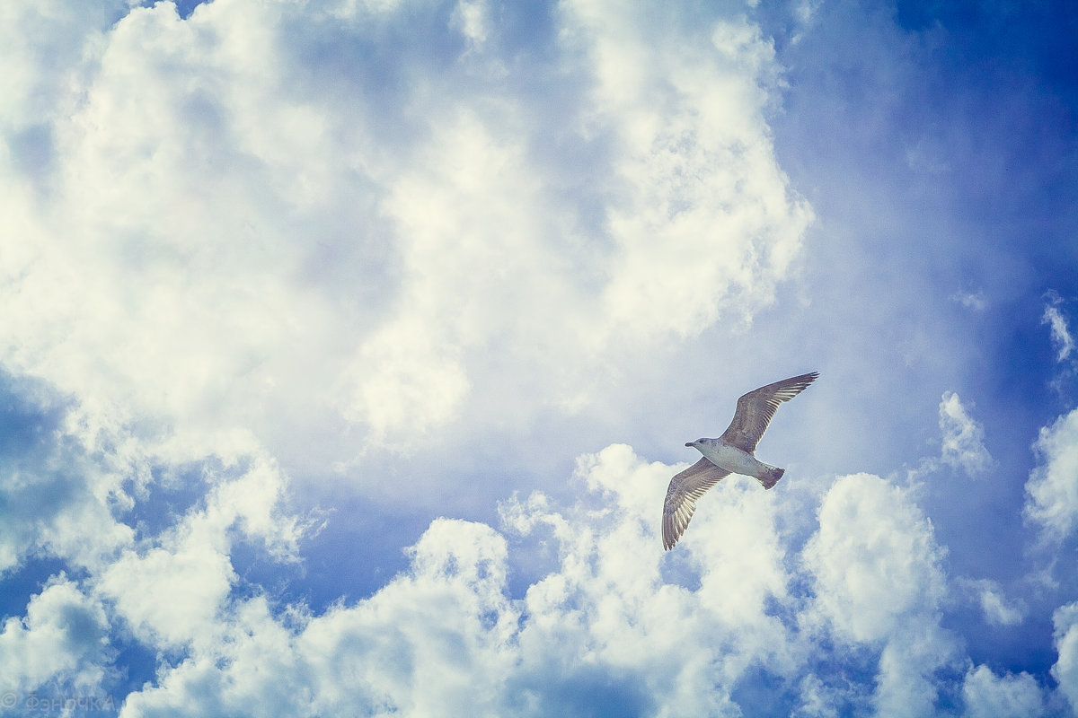 Наслаждение полетом - Виктория Коломиец