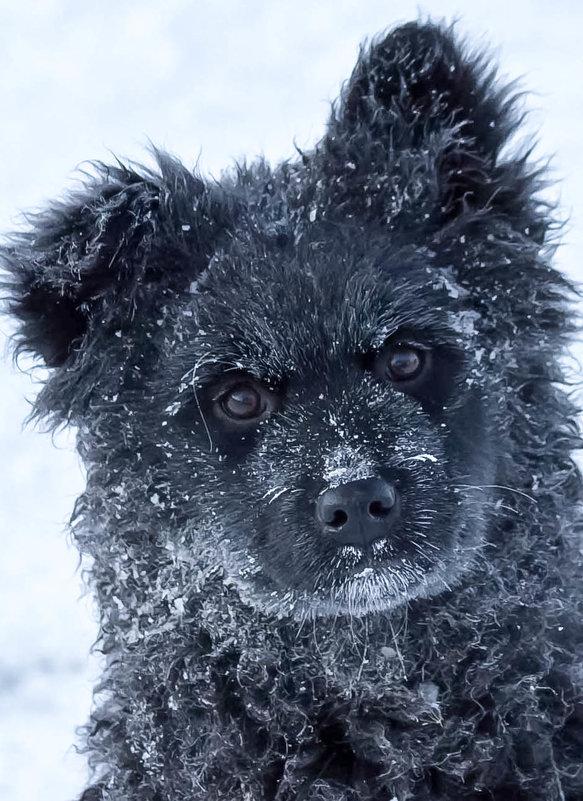 морозно однако... - Сергей
