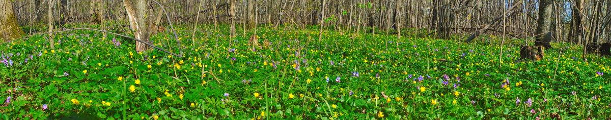 лесные цветы весной - Михаил Николаев