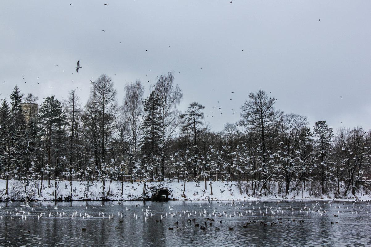 Зимний день - Алёнка Шапран