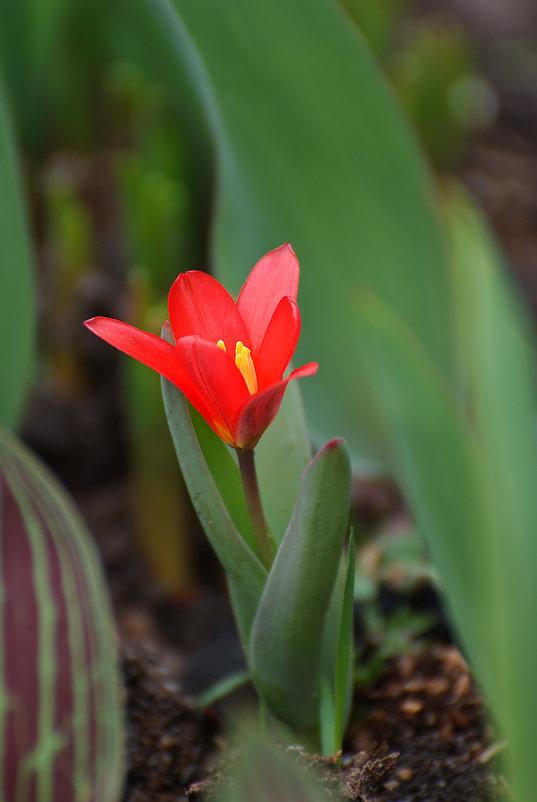 Аленький цветочек - Сергей ***