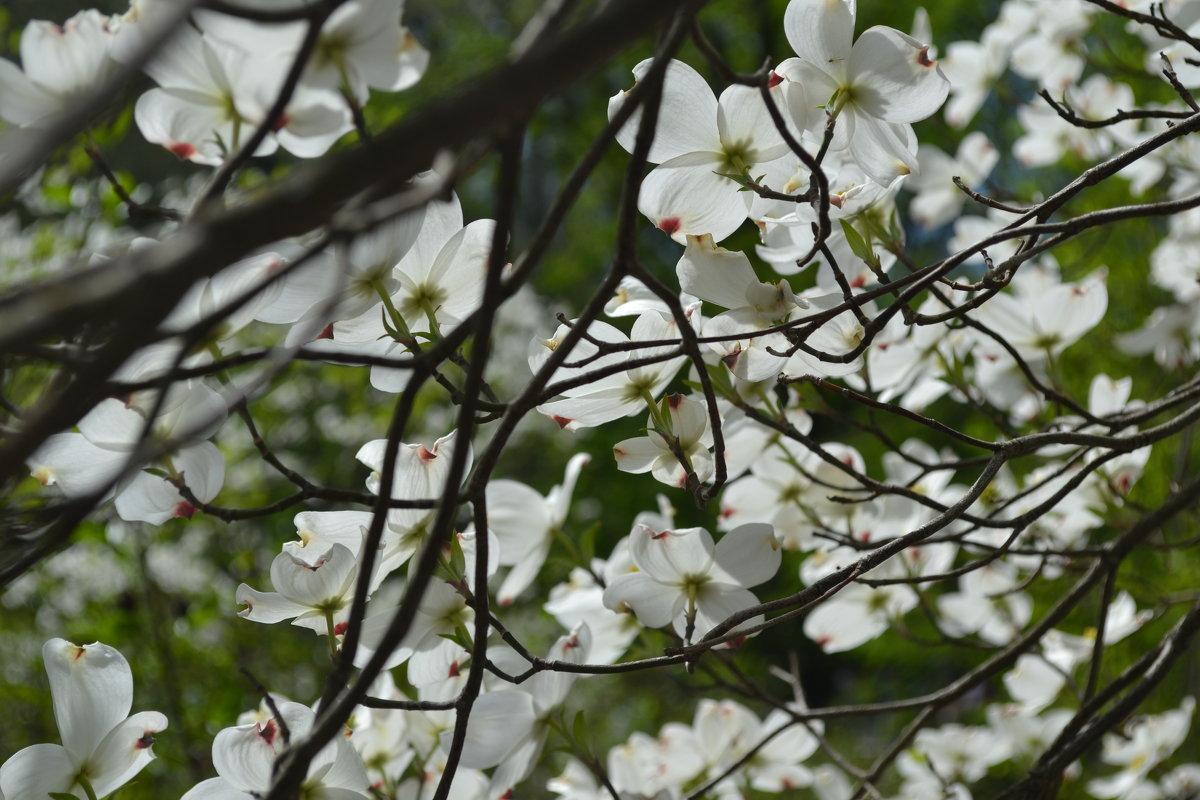 Цветочное дерево - Анитушка Мокеева