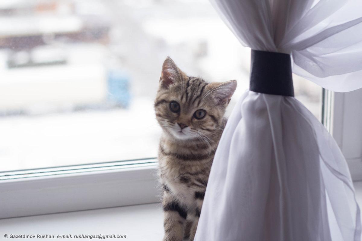 Котенок - Рушан Газетдинов
