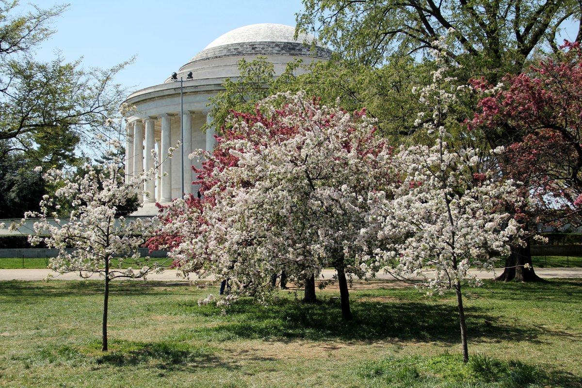 Апрельский Вашингтон - Виктория