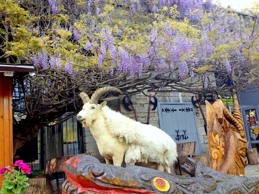 На горе Ахун. Сочи - Tata Wolf