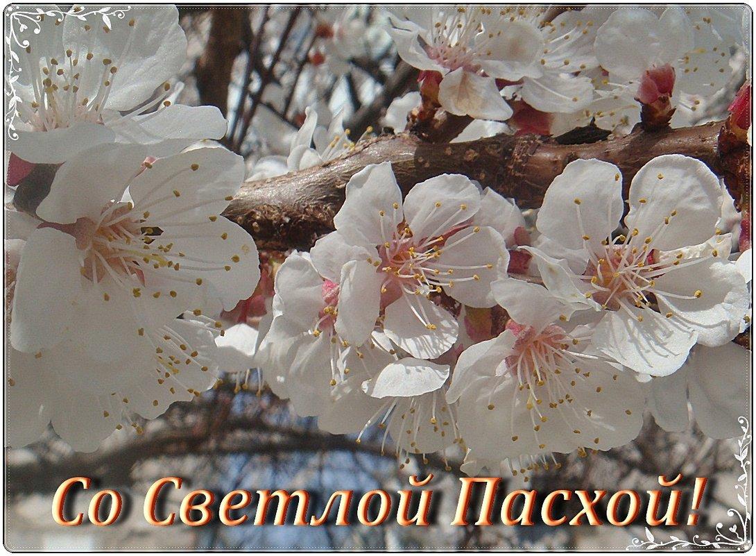 Пусть  ваши души искрятся верой, помыслы - добром, а сердце - любовью - Нина Корешкова