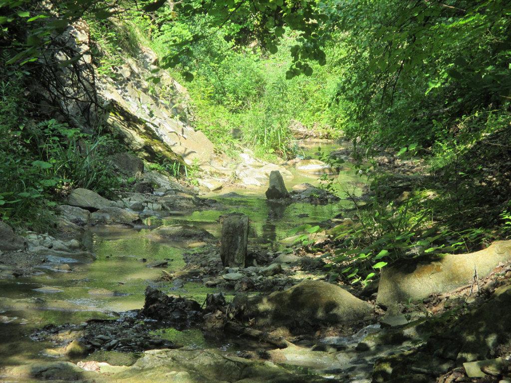 Лесной ручей - Дарья