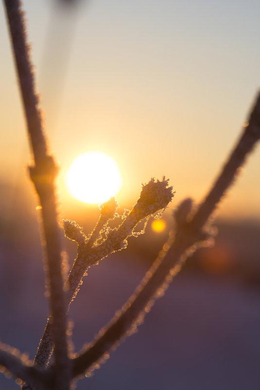 зимний закат - Полина