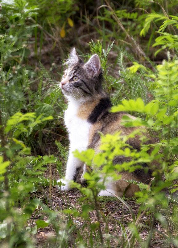 Задумчивый кот - Полина