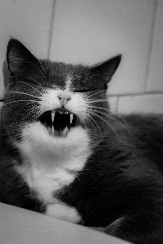 Не будите в котейках ненастного зверя… - Алексей (АСкет) Степанов