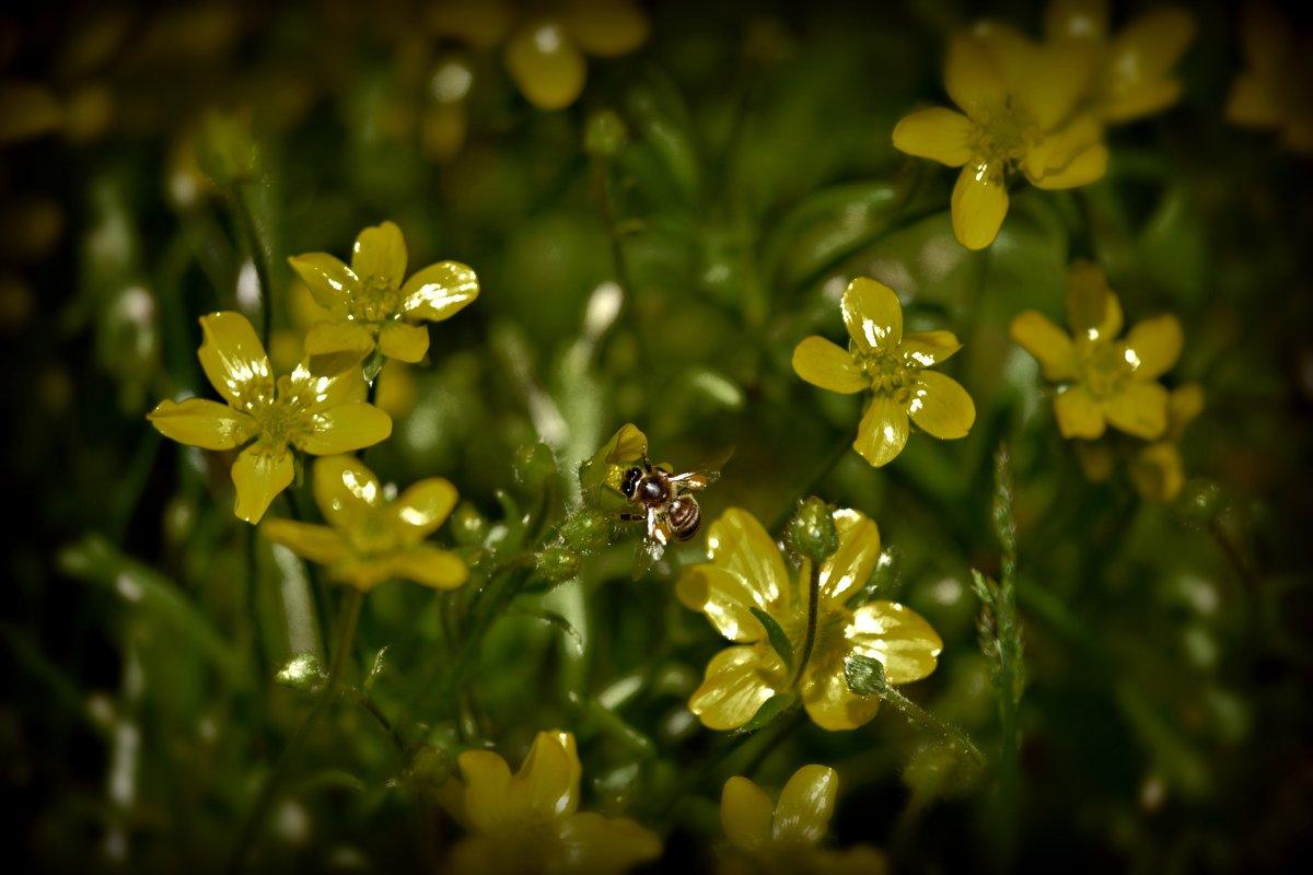 Жёлтые салютики - Nina Streapan