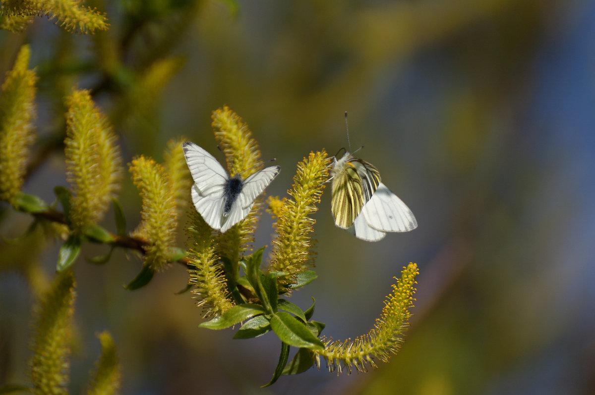 Бабочки - Илья Костин