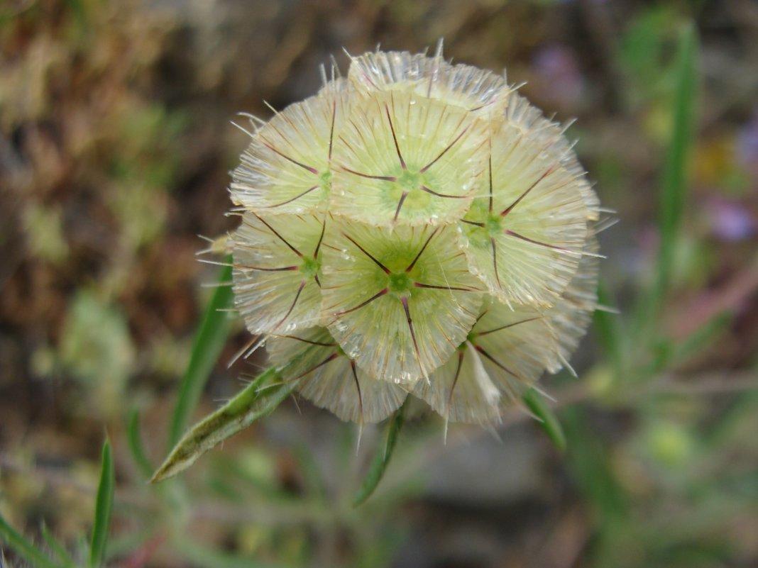 Горные растения - Gudret Aghayev